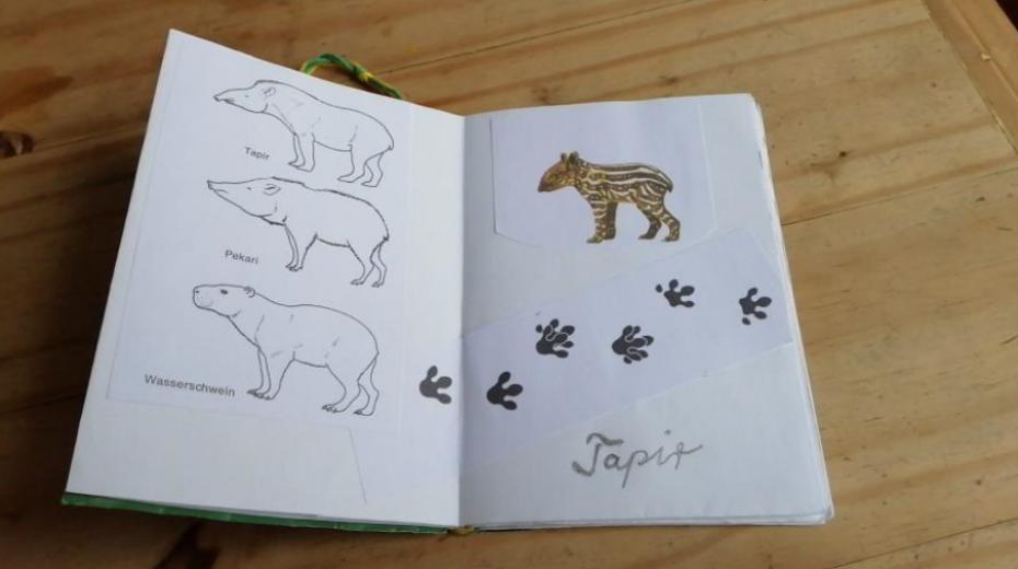 Artenvielfalt kennen und schätzen lernen: Tierbestimmungsbücher Regenwald selber herstellen