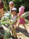 Der Kohlrabi  ist eine Gemüsepflanze und gehört zu den Zuchtsorten des Gemüsekohls. Verzehrt wird er meist nur die oberirdische Knolle. Je nach Sorte kann diese kugelig, plattrund oder oval geformt sein; die Farben reichen von weißlich über ein blasses und kräftiges grün bis violett
