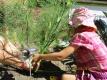 Beim Fenchel handelt es sich um eine zweijährige bis ausdauernde krautige Pflanze, die Wuchshöhe von 40 – 200 cm erreicht und würzig (anisähnlich) riecht.