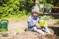 Aber auch Pflanzen, die einfach nur schön aussehen oder toll duften, wie beispielsweise Lavendel oder Sonnenblumen, können Kinder begeistern.