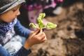 Es ist wichtig für Kinder, zu sehen, dass nicht alles aus dem Supermarkt kommt, sondern Gemüse und Obst auch im eigenen Garten wachsen kann.