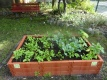 Unser Gemüsebeet