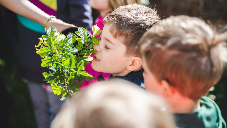 """""""Der Garten für die Sinne"""". Kinder möchten alles sinnlich erfahren: sie möchten Pflanzen anfassen, riechen und schmecken."""