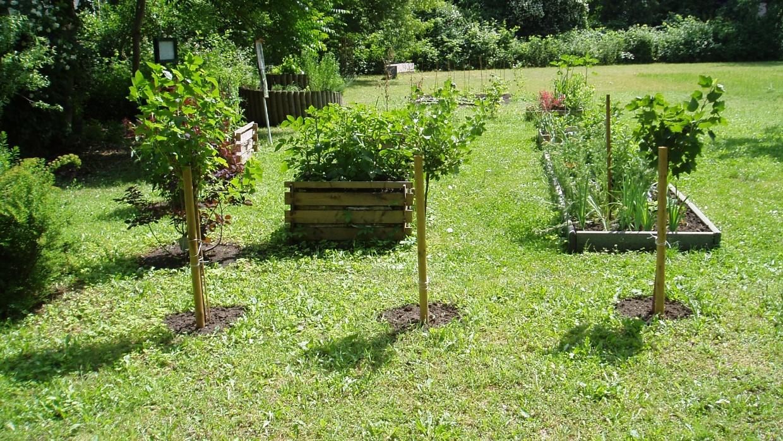 3 Beerensträucher und Beete